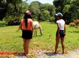حيوانات تزاوج حصان ينيك سكس فيديوهات