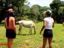 قذف حصان فى كس نساء