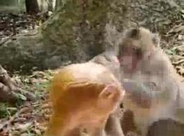 مقاطع فيديو سكس مرضعة حيوانات